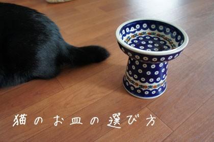 food-cat